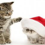 Consells per les festes nadalenques.