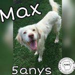 Max en adopció.