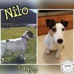 Nilo en adopció.