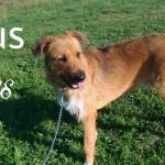 Rufus en adopció.