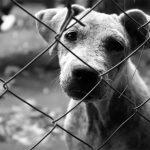 Fem bé en regalar animals?